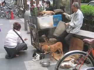 woman feeding homeless man's dogs.
